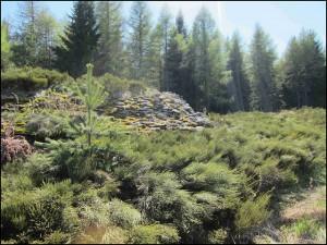 la clairière au bois des Fraux