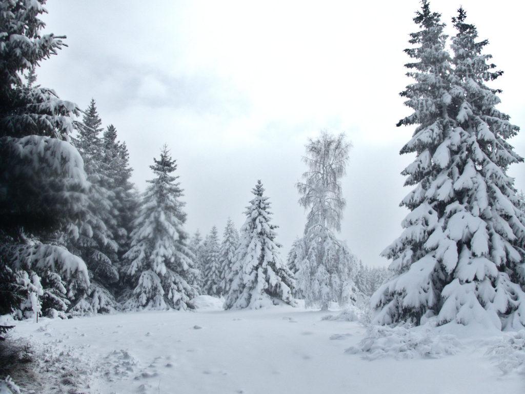 En forêt du Ché (hiver 2016)