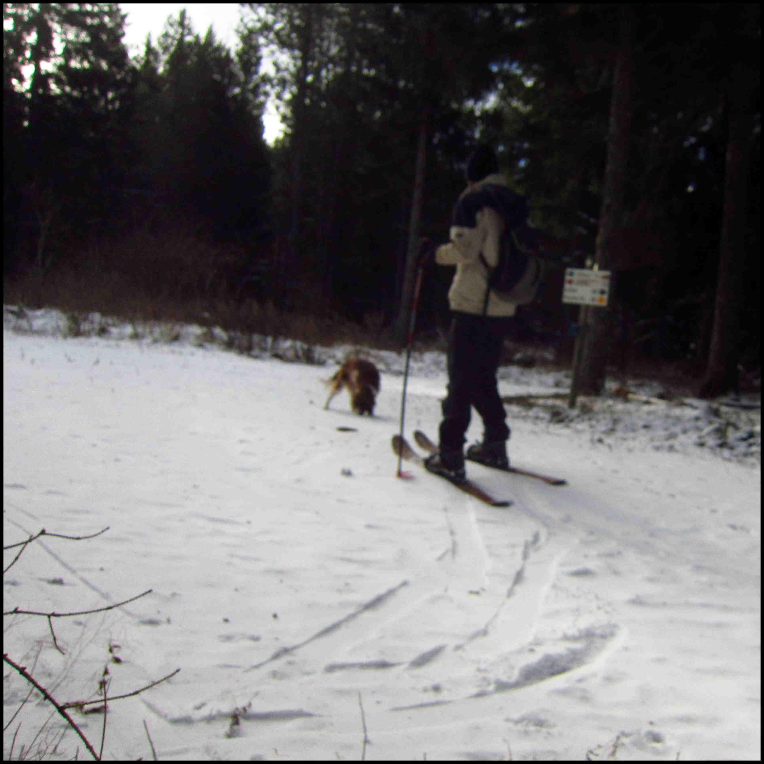 25 janvier : Balade en skis Hok en forêt du Ché