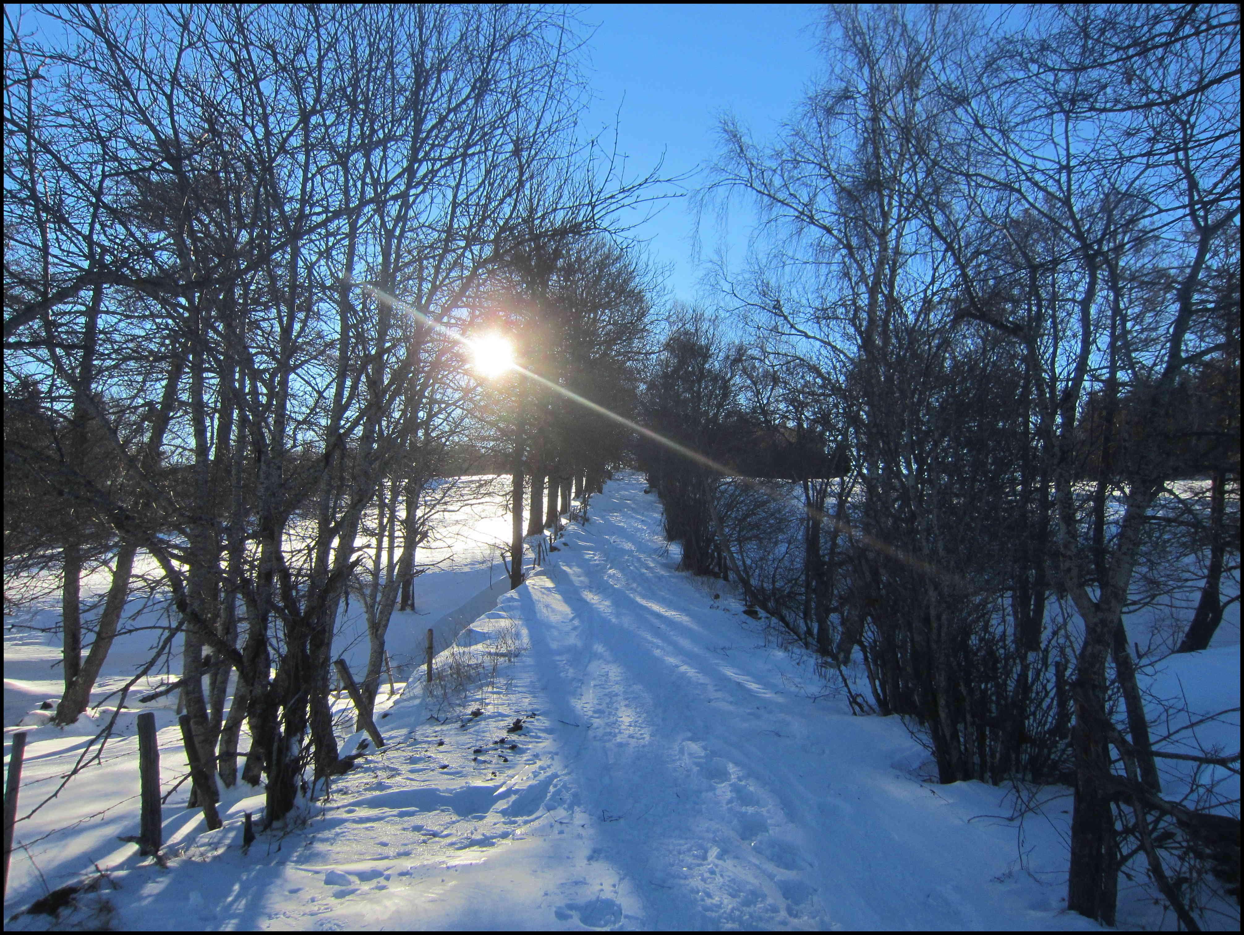 Autour du village, skis HOK, petit matin du 15 février
