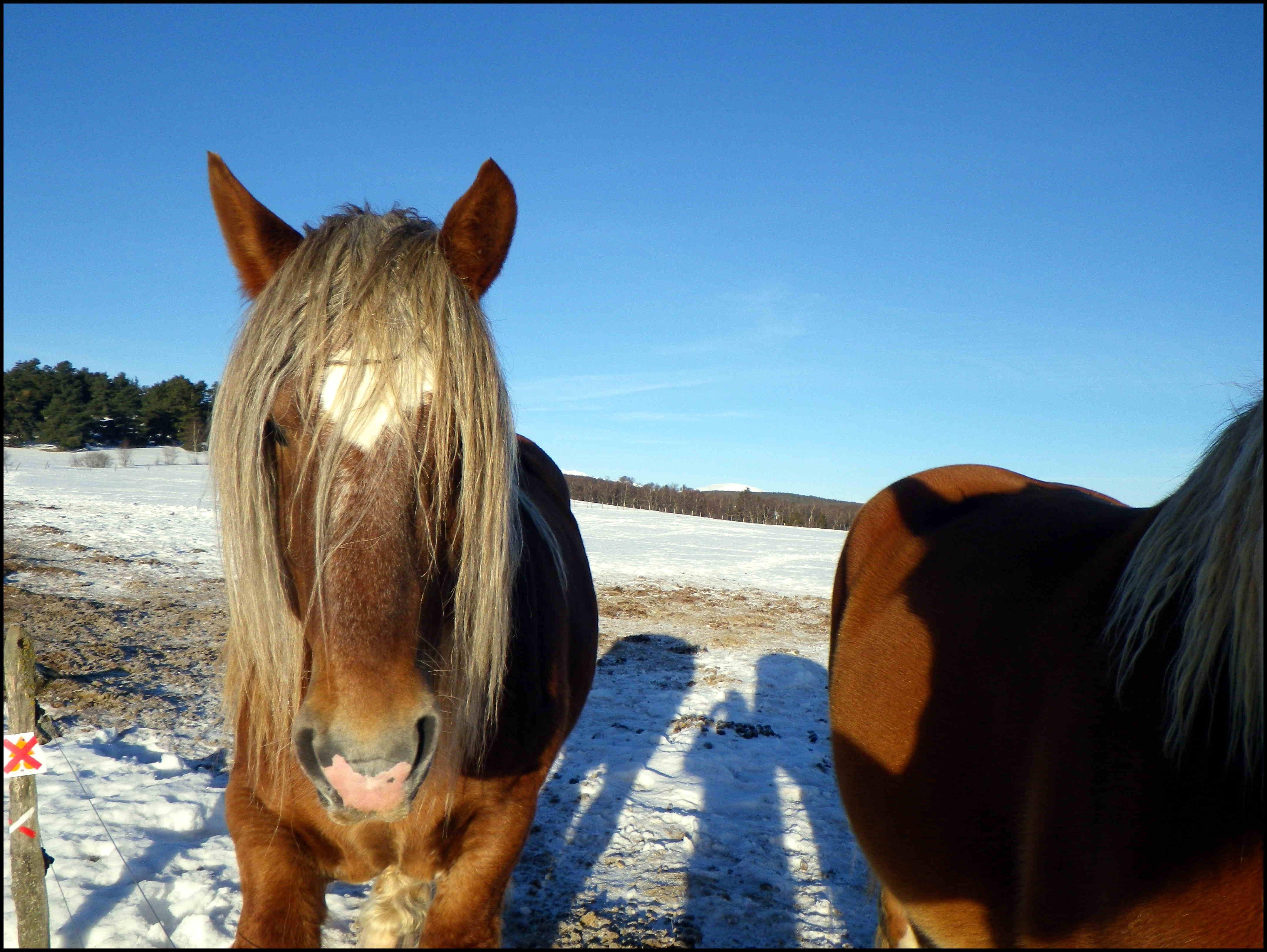 samedi 28 : hokeurs, chiens, skieurs (et chevaux aussi !)