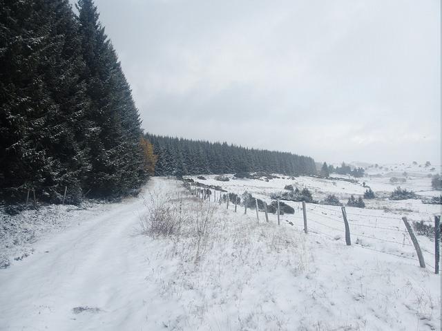 L'offensive hivernale du 21 novembre 2015