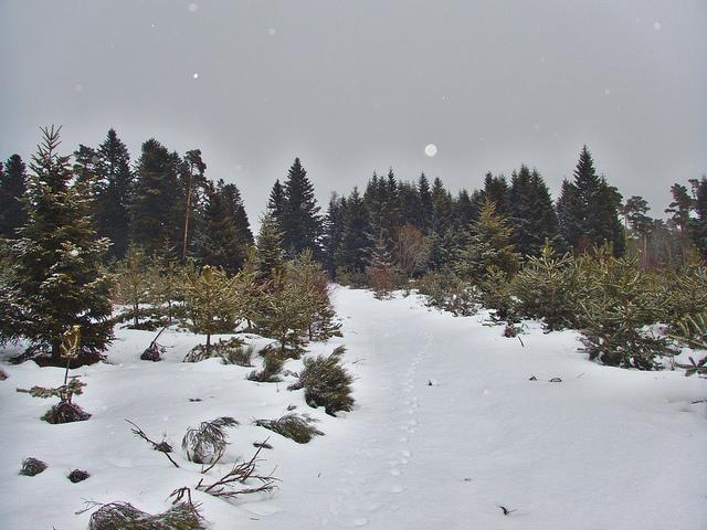 Le bois des Fraux est encore sous la neige !