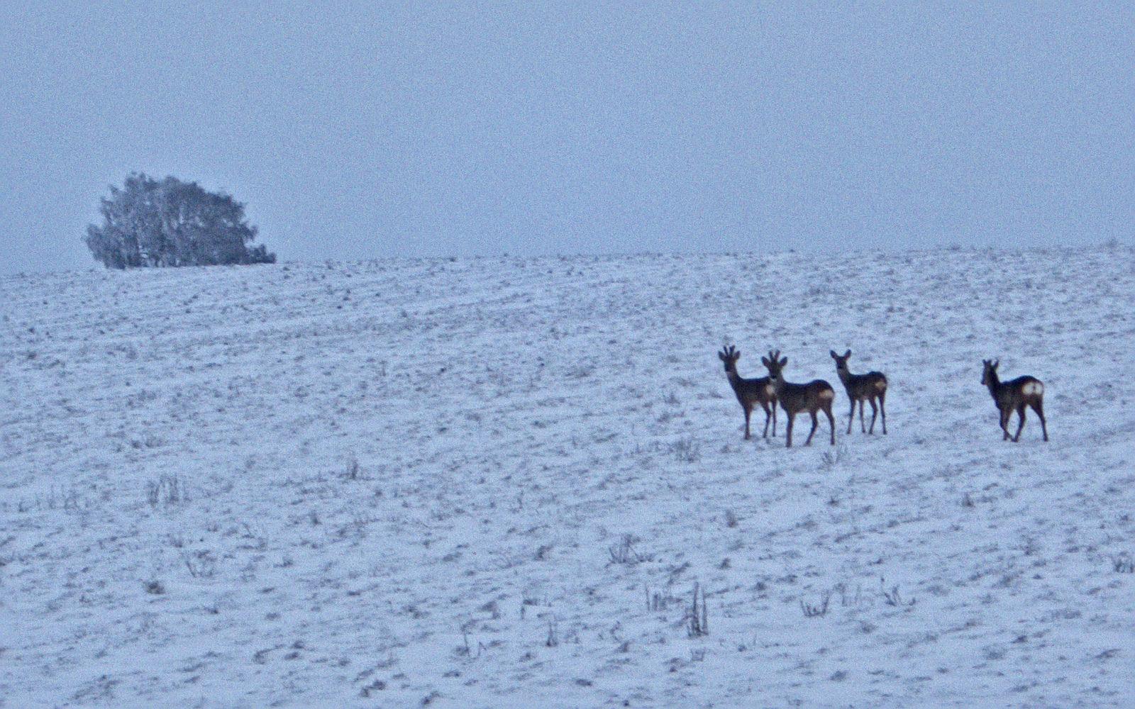 Apero-conf Mardi 28 février à 18h30 : Matthias DAUB : Passer l'hiver : comment les animaux et les plantes s'adaptent-ils à la saison froide ?
