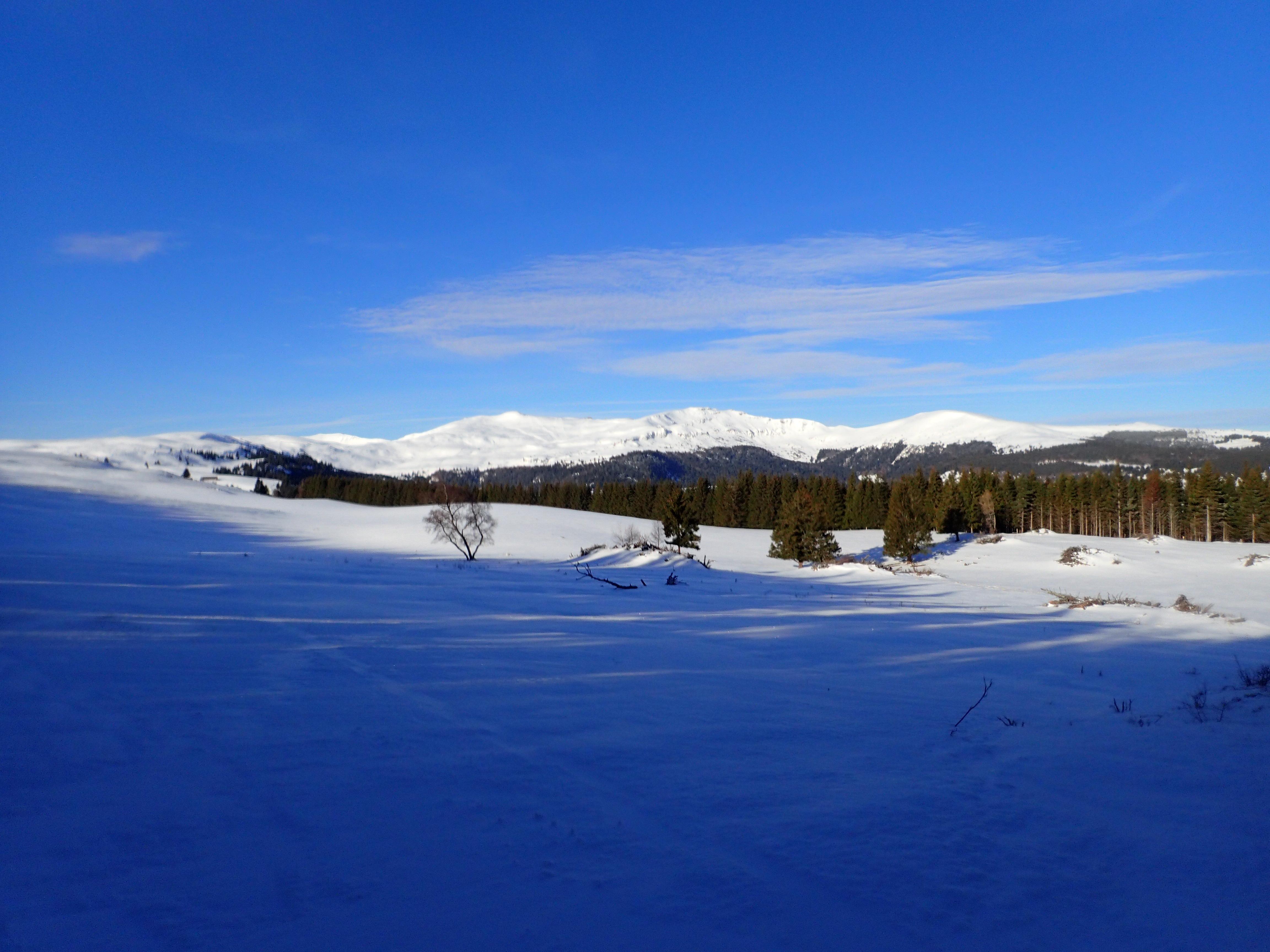 La forêt du Ché version bleue glacée